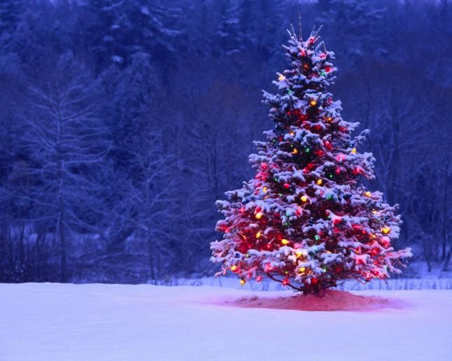 hd-wallpapers-winter-season-snow-christmas-trees-tree-desktop-wallpaper-1280x1024-wallpaper